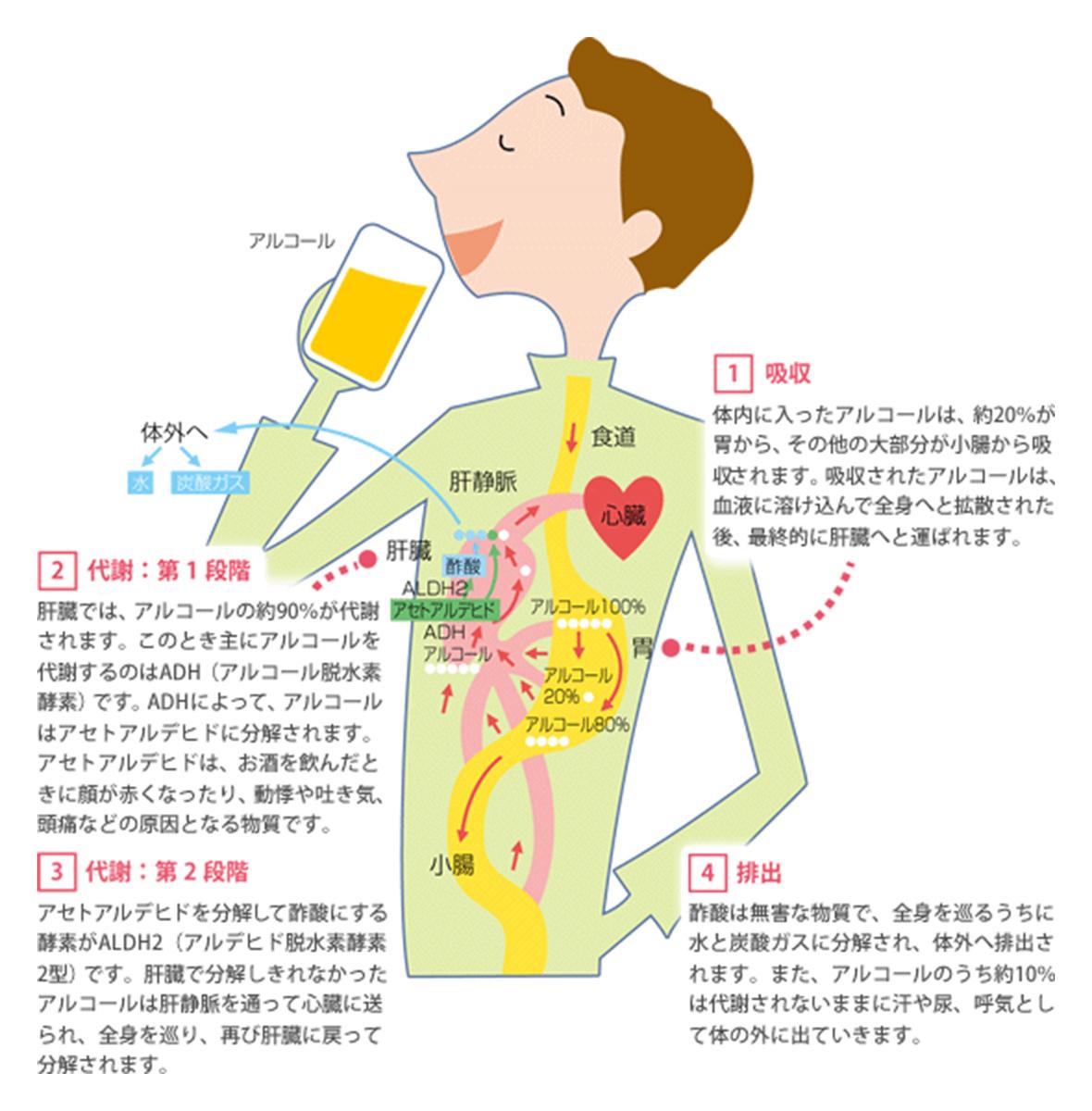 抜ける 時間 アルコール